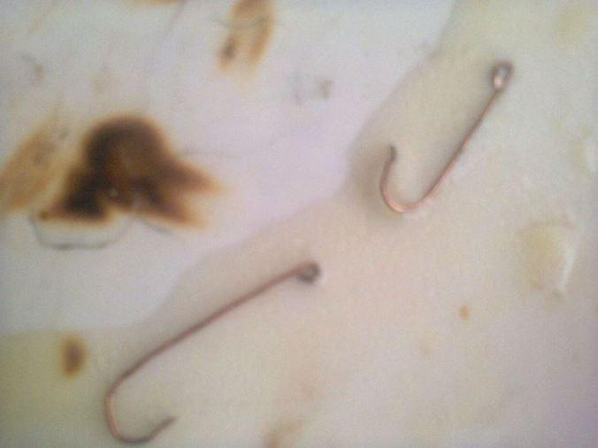 Fish-Hooks-Testimony